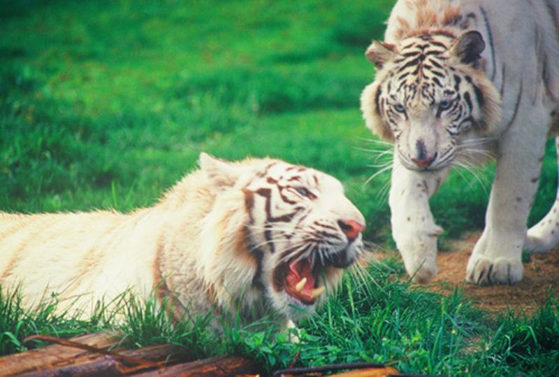 杭州野生动物世界介绍