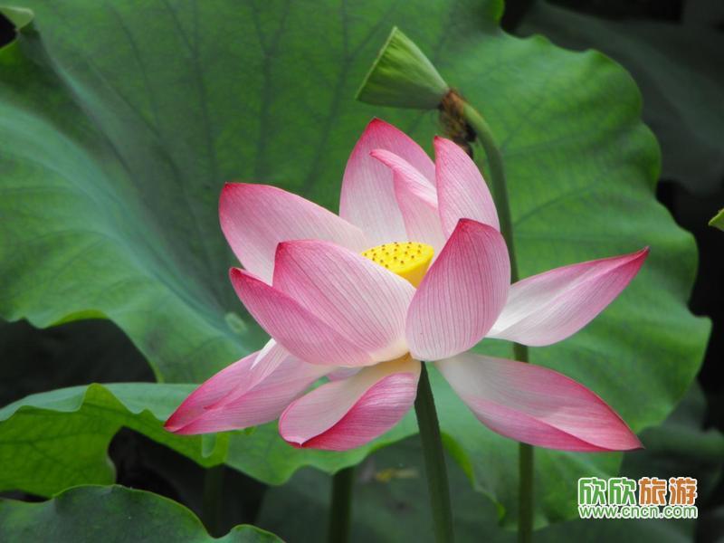 小资旅游地 杭州西湖