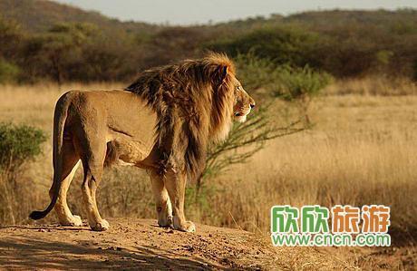 雄狮的眺望