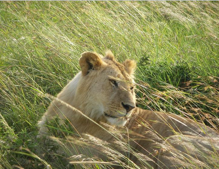 肯尼亚野生动物园旅游