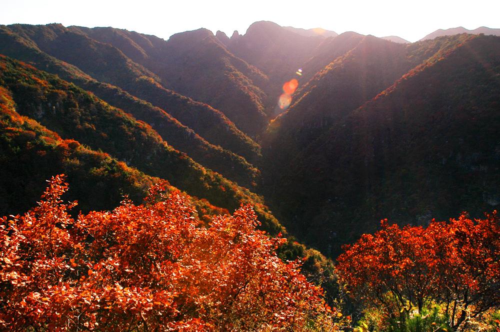 五龙洞国家森林公园_五龙洞国家森林公园风景图片