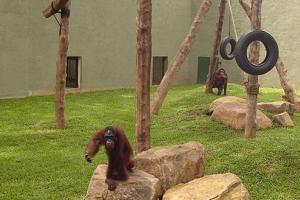 德希乌拉动物园
