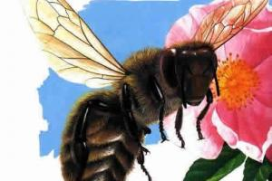 蜜蜂博物馆