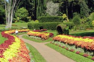 佩拉德尼亚植物园
