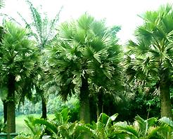 勐巴拉王国园林