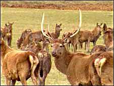 长毛岭养鹿场