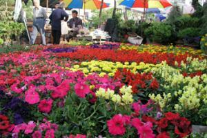 新美花卉园