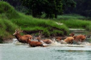 大丰麋鹿保护区