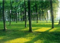 海滨森林公园