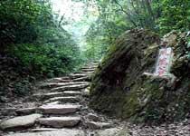 凤凰谷森林公园