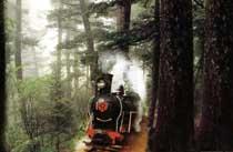 南山森林公园