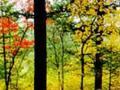桃山国家森林公园