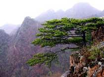 拉法山国家公园