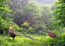 董寨鸟类自然保护区