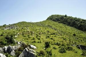 阴条岭自然保护区