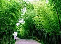 赤水竹海公园