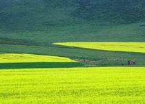 大马营草原