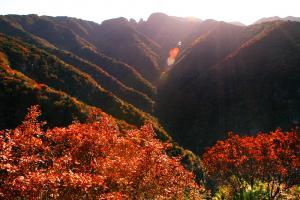五龙洞森林公园