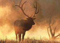 拜城县国际狩猎场