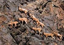 卡拉麦里有蹄类自然保护区