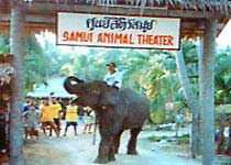 动物表演场