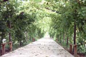 葡萄谷生态园林