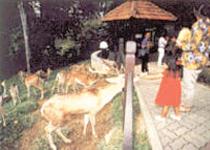 国家动物园