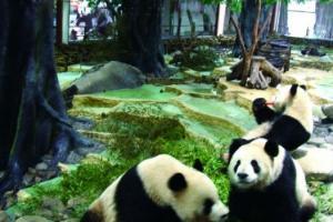 长屿硐天熊猫馆