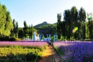杭州薰衣草庄园
