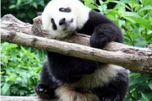 下渚湖熊猫园