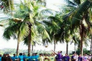 三亚椰子岛