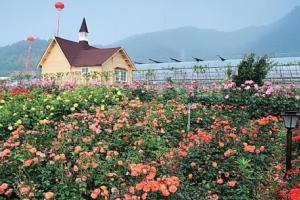 丽盛玫瑰庄园
