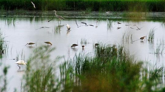 曹妃甸湿地