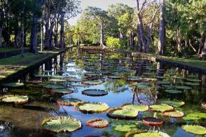 庞普勒穆斯皇家植物园