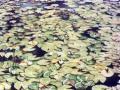 莲花保护区