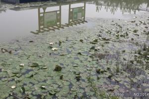 洪泽湖观鸟园
