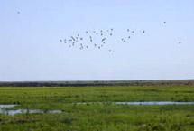 野生水禽栖息地