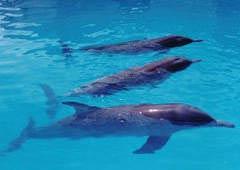 熱帶海洋動物園