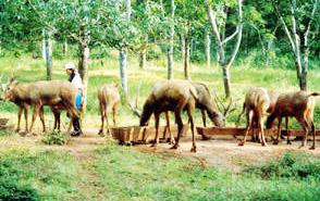 大田坡鹿保护区