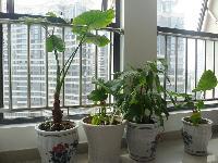 公司窗台绿植
