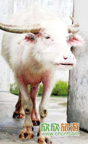 厦门:中山公园动物园引进5种珍稀动物陪伴游客过年(图