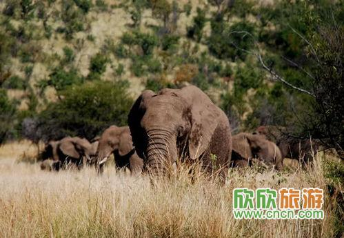 """南非动物种类丰富,除了众所周知的""""非洲五大&"""