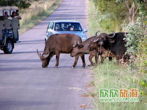 人与动物和谐相处,各种濒危动物在保护下