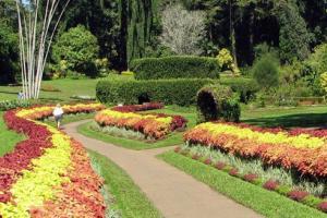 世界闻名的佩拉德尼亚植物园(Peradeniya Botanic Gardens)位于康提城西南5公里处,是斯里兰卡最大的植物园,亚洲第二大植物园(仅次于印尼茂物植物园)。英国殖民者入侵前,它是斯皇家花园。  创建于1821年的这所植物园,占地60万平方米。东、西、北三面为马哈韦利河所环绕,风景绮丽。园内地势起伏,平均海拔460米。植物园内种植着来自亚洲、非洲、拉丁美洲和大洋洲各地的热带和亚热带植物4000多种,珍奇花木,种类齐全,蔚为大观。注意事项  植物园内蚊虫较多,要提前做好防护工作。