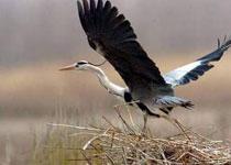 青铜峡鸟岛