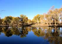塔里木河游览区