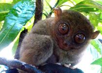 眼镜猴游客中心