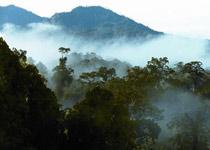 丹浓谷自然保护区
