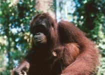 西必洛猿人保护区