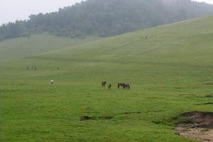 关山牧场-龙泉山庄